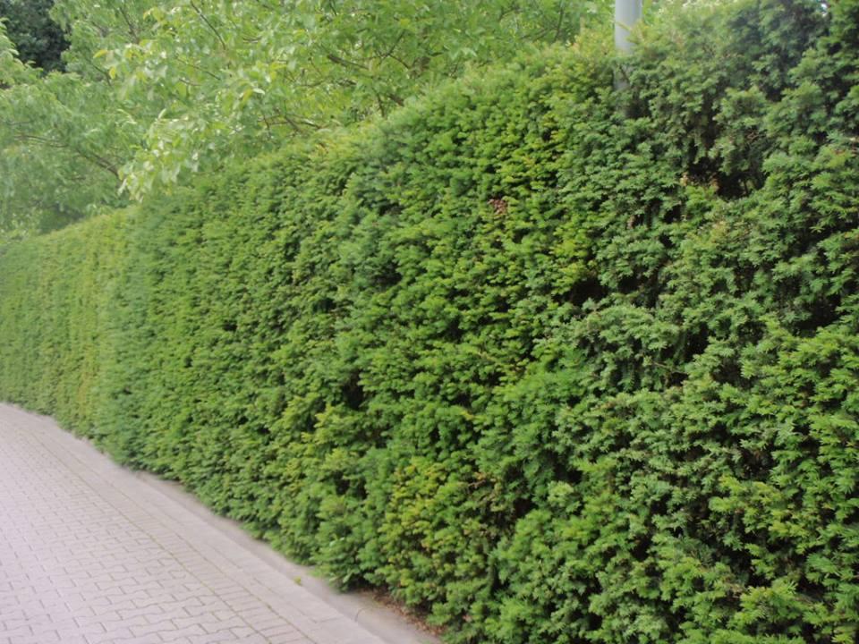 Goedkoop Tuin Aanleggen : Goedkoop tuin aanleggen moderne vijver met stoere stapstenen het